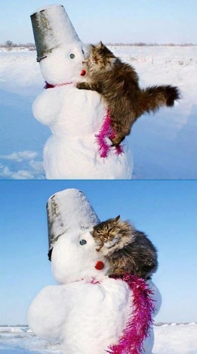 cat and snow man