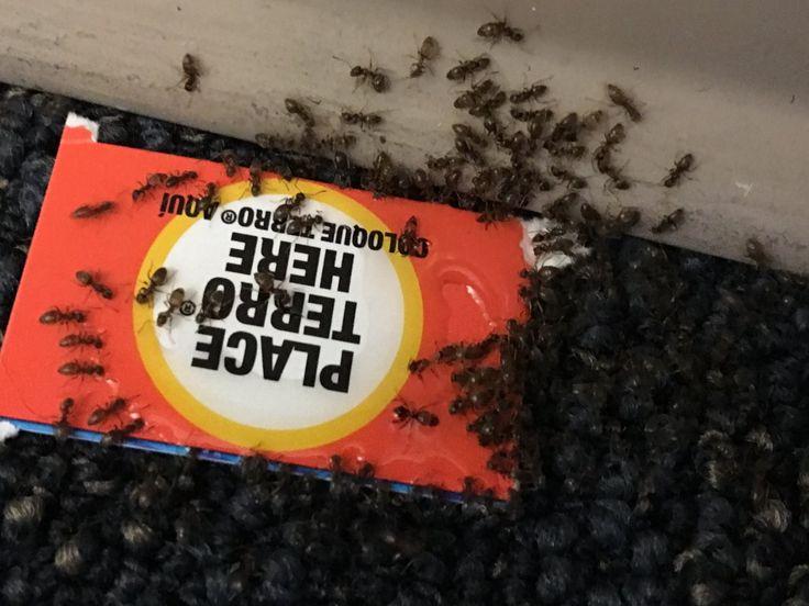 TERRO Ant Killer (@TerroDeadAnts)   Twitter