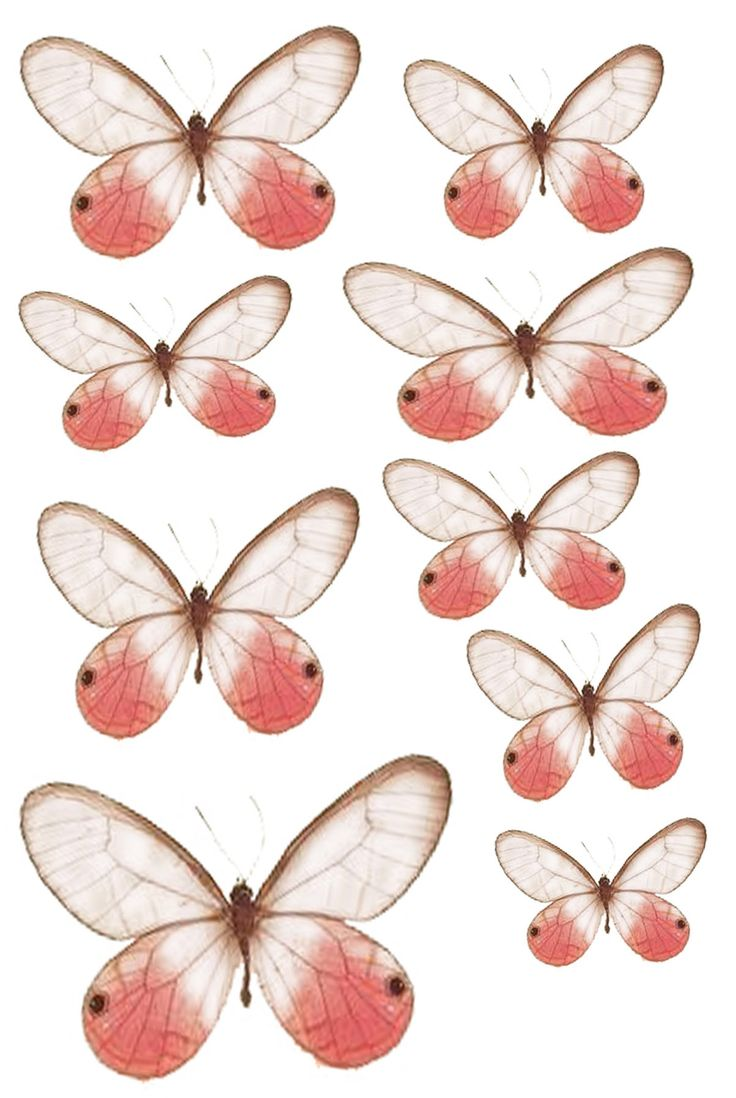 Pink and white Butterfly PRINTABLES