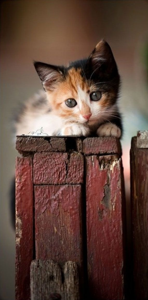 Adorable cute little kitty waiting for her mother cat.... click on picture to…