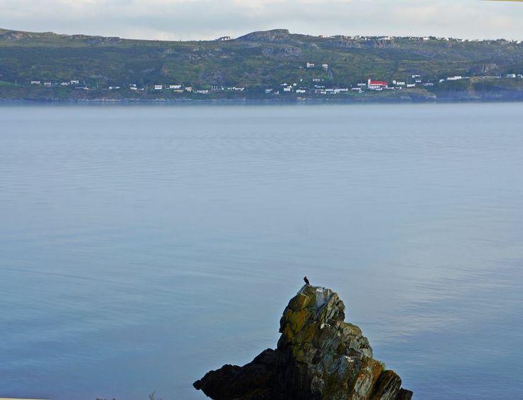 Cormorant viewing Bishop's Cove Shore
