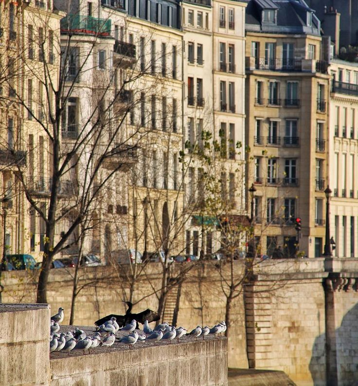 In other news The Birdy Orchestra of Paris acquired a new somewhat flamboyant Conductor.  ______________________________________________________ #Paris #France #Seine #Hausmann #BirdWatching #Architecture #Archilovers #TravelPhotography #StreetPhoto #RoamThePlanet #MoodyGrams #ExploreToCreate #PassionPassport #EyeForDetail #VisualsCollective #somewhere_mag #natgeotravel #mytinyatlas #myfeatureshoot #athomeintheworld #igersParis #vscoParis #bestofvsco #igmasters #parisjetaime #winter…