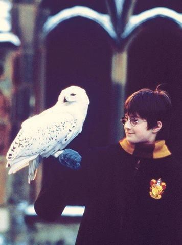 Harry and Hedwig<3