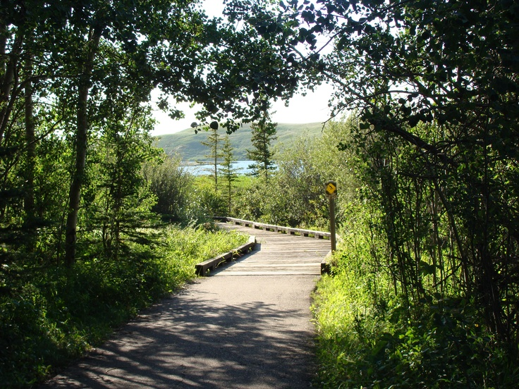 Elkwater Lodge trail in Cypress Hills Provincial Park