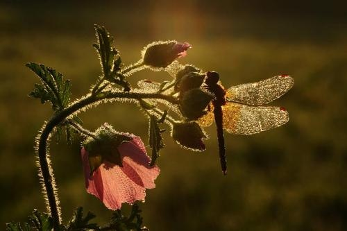 lightLights, Beautiful Backlight, Beautiful Flower, Butterflies, Dragonflies Wings, Dragons Fly, Insects, Nature Beautiful, Photography
