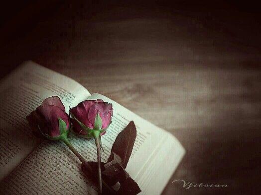 Roses...roses...  Sony Ericsson c901