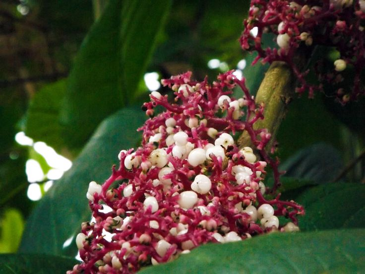 Extraña flor morada crece en los cafetales de la finca. ¿Necesitas fotos como esta para el contenido de tu web? Visita: www.laweb.com.co/contenido-web/
