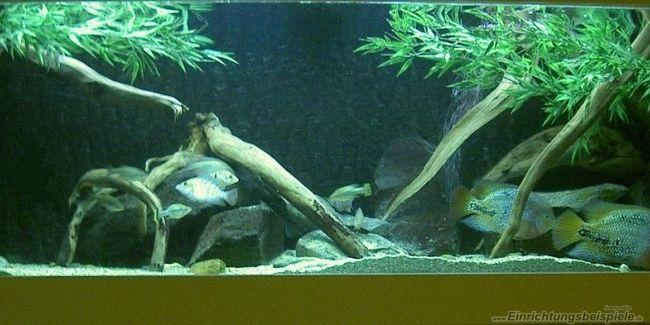 Der User Bert Teseling stellt sein Aquarium  (Amerika-Gesellschaftsbecken) mit den Abmessungen 1,60 x 0,60 x 0,60 (576 Liter) mit 16 Bildern vor.