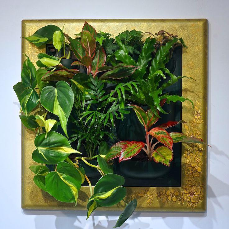 Фитокартины Flowall | фитостены | фитомодули #verticalgarden #greenwall #livingwall #Green #Wall #minigarden #фитокартины #фитостены #Flowall