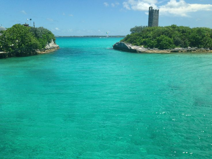 Best Caribbean Island To See Dolphins