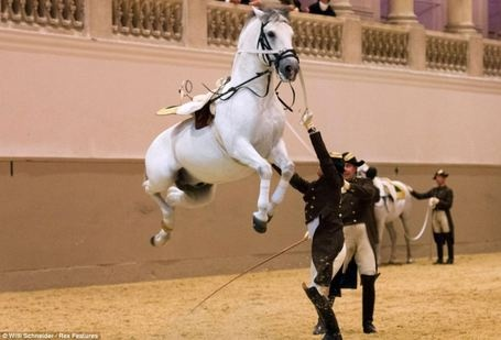 The Vienna based Hofritzschule or Spanish Riding School : Home of 72 performing Lipizzaners.