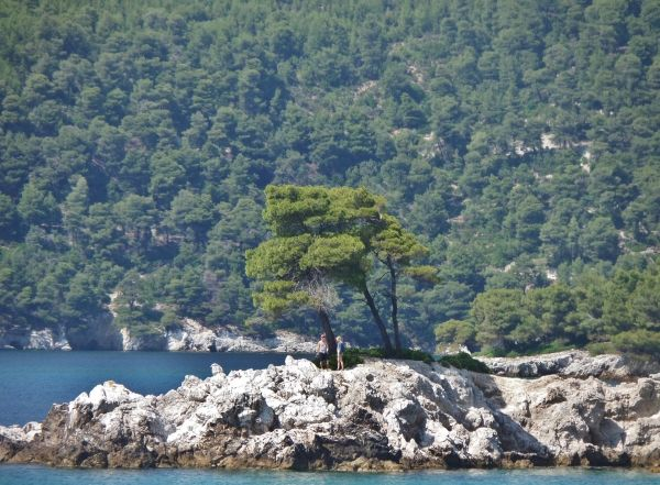 Mamma Mia trees in Agnondas, Skopelos
