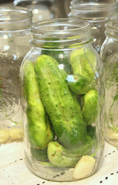it's just Laine: Preserving the Harvest: Homemade Claussen-Style Pickles