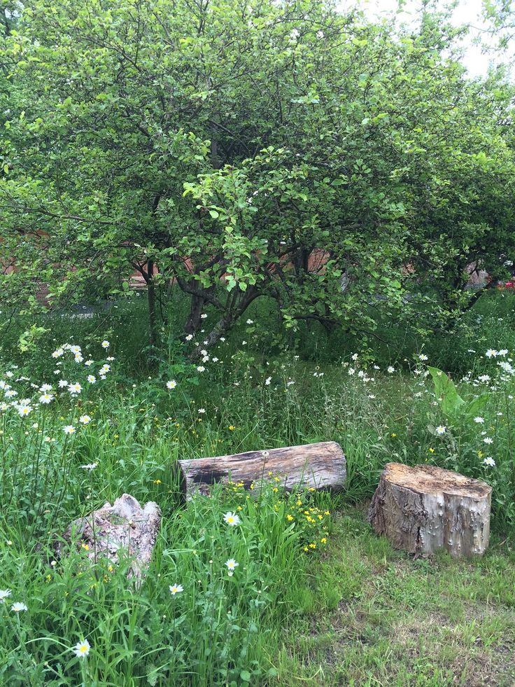 A natural seating area creates a relaxing space to escape to in an orchard and wildflower meadow.