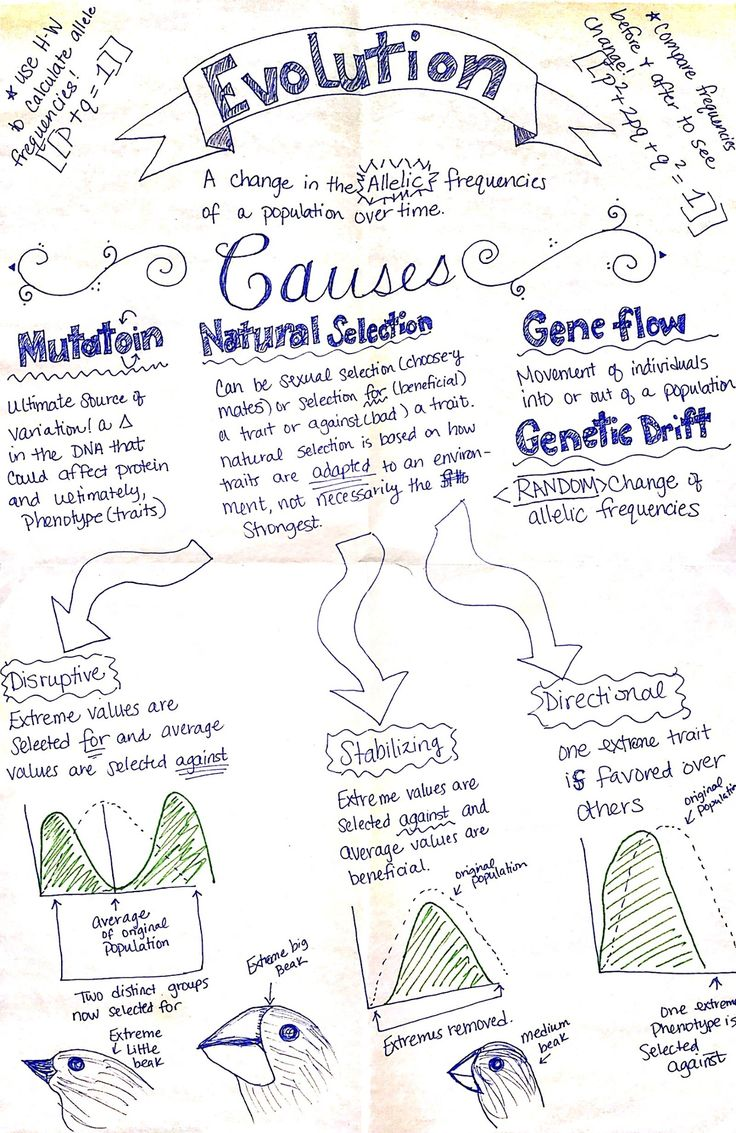Evolution Part 1 - AP Biology ThingLink