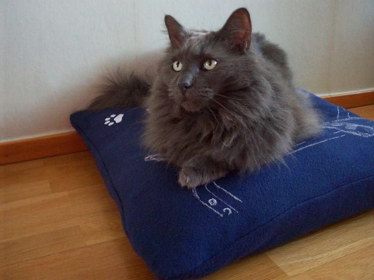 Vackra Bamse på den marinblå Saccosäcken. Revolutionerande nyheten för katter! Kolla in på www.katt4you.se