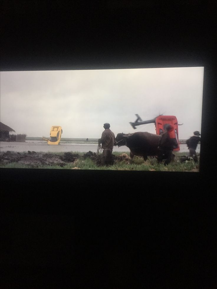 I spotted a bull in James Bond. You can really tell that bulls are female cows in this.