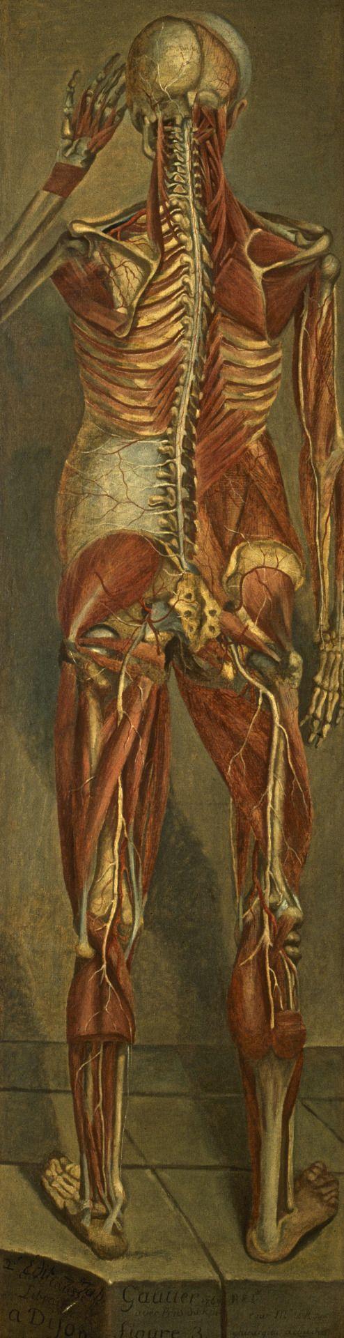 ☤ MD ☞☆☆☆ Jacques Fabien Gautier d'Agoty. Anatomical Figures. 1764.