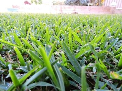 Drought Tolerant Grass Varieties – What Are Some Types Of Drought Resistant Grass For Lawns