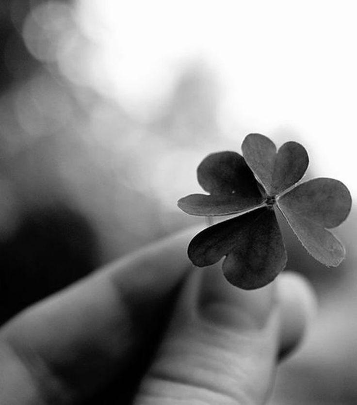 Vendredi 13 : même pas peur, avec notre trèfle à 4 feuilles :) #chance #13
