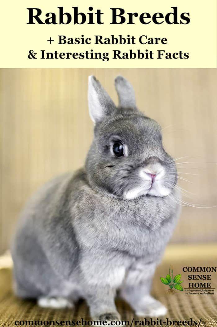 Rabbit Breeds Basic Rabbit Care Interesting Rabbit Facts