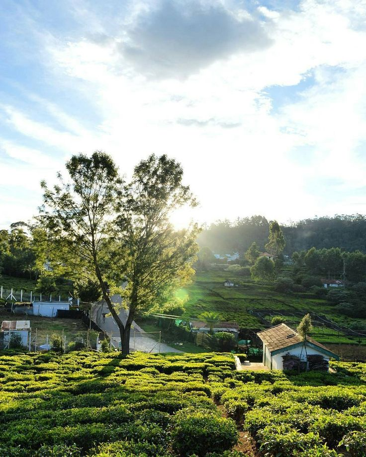 Wellington town , Ooty , TN , India.