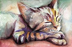 Sleeping Kitten by Olga Shvartsur