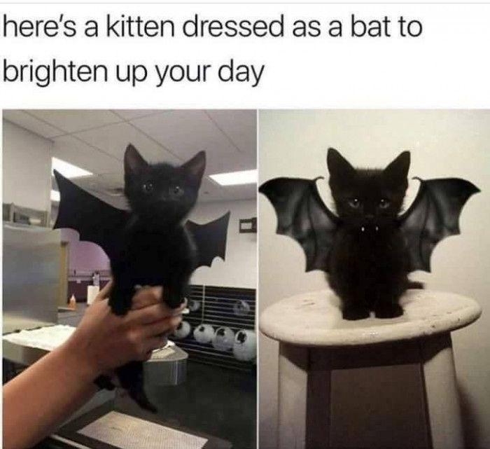 TOP 75 lustige Katzen Meme -…   – StubenTiger