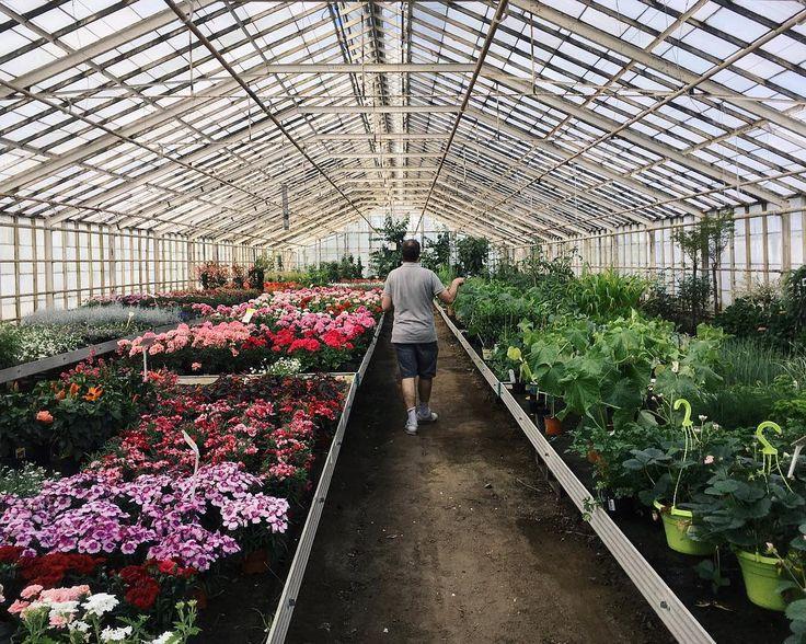 #gardencentre #gardening #hinnerup #flowers #plants  #foliage #green #vscocam