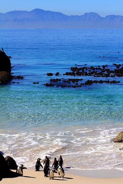 Boulders Beach, Simonstown, Cape Town, South Africa