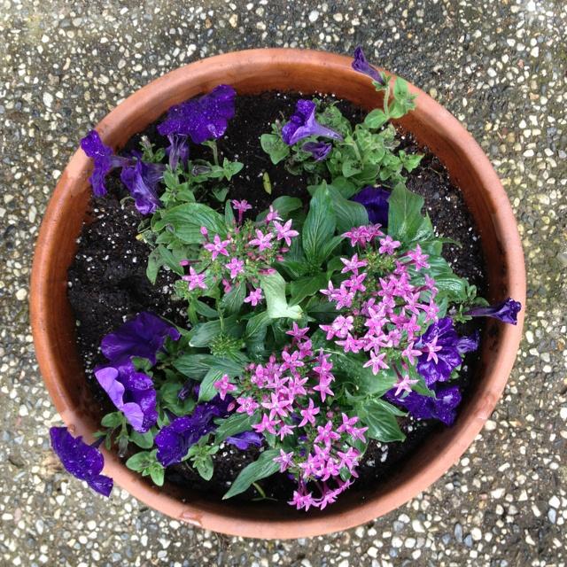 Summer flowersSummer Flower