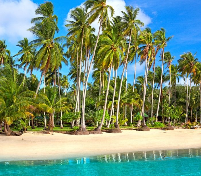 Tuvalu - coconut trees. I called Tuvalu home for a short time, sometimes at the early 2000s, and I hope to call it home again someday...