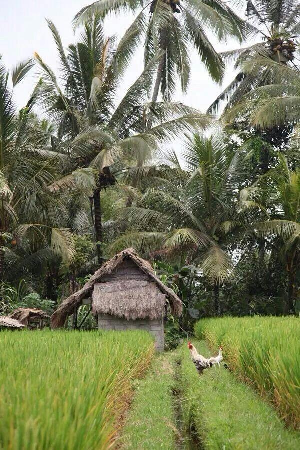 Rural Bali - via Bali Expat Services