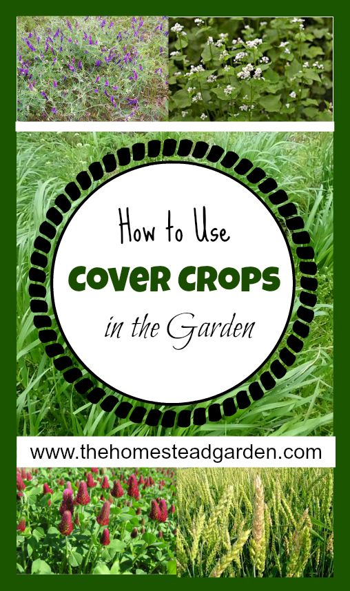 Wonderful How To Use Cover Crops In The Garden