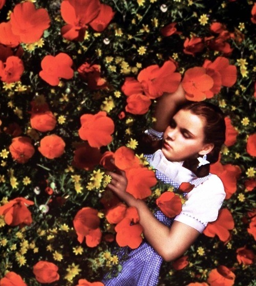 Why Poppies? History shows they were used to put children to sleep, during harvest time.