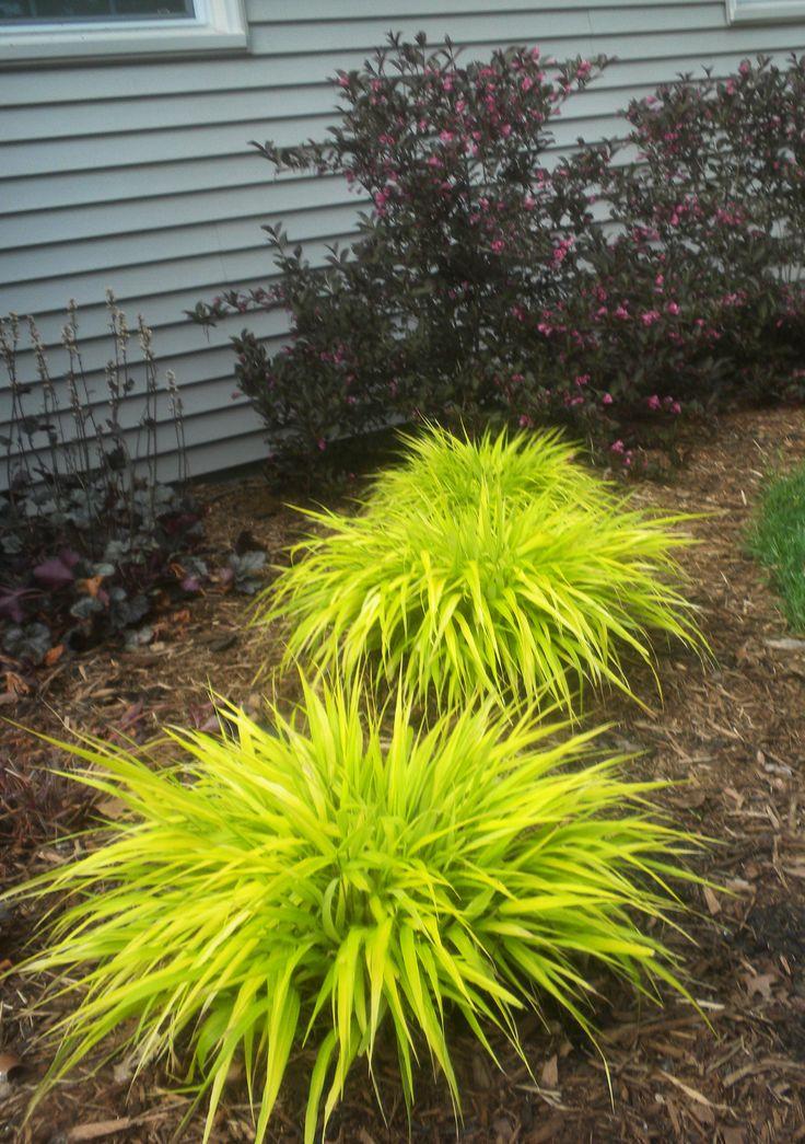 Superior Garden Grass #1: 964e752ba15ace3ba6502050fd6df464--hakone-grass-dry-garden.jpg