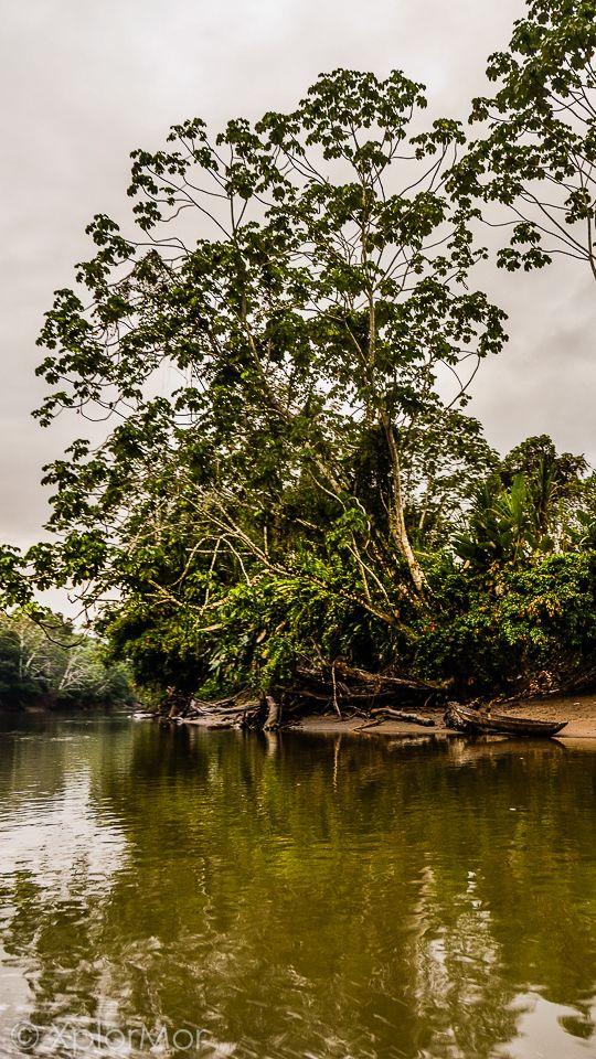 Jungle River Scene. Darien National Park, Darien Gap, Panama
