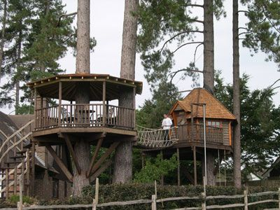 Octagon Tree House Tree Houses Pinterest Adult Tree
