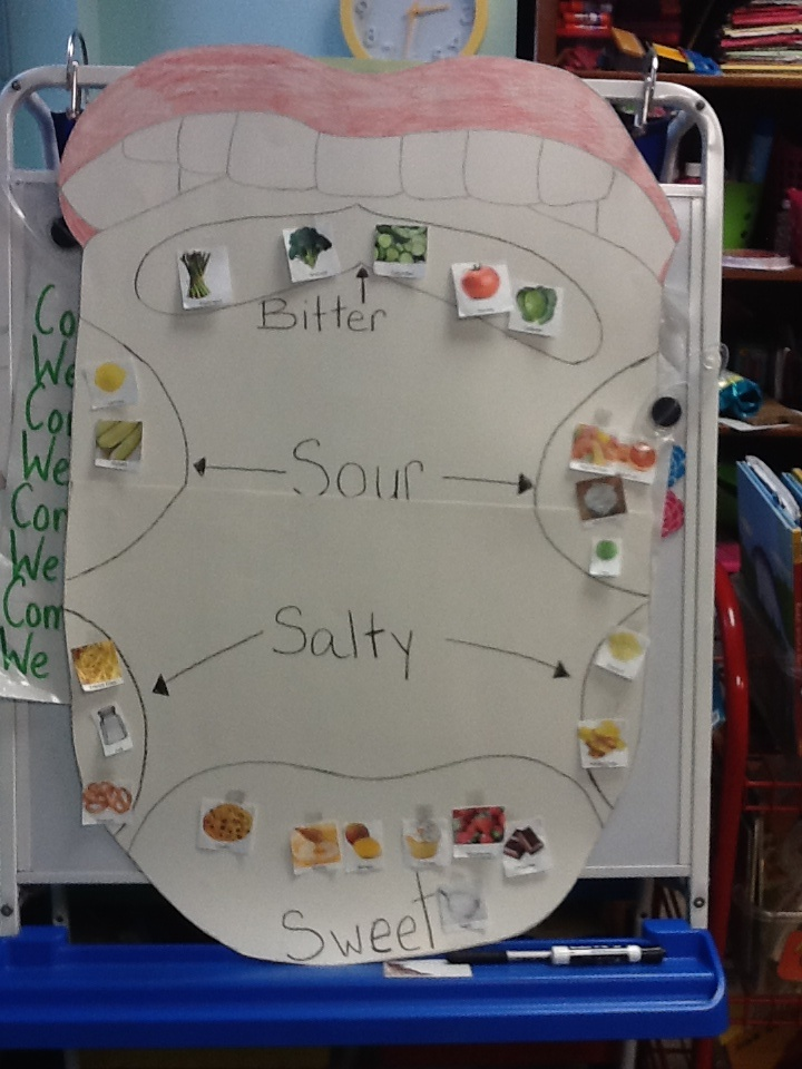 Kindergarten learning about their sense of taste. I drew a tongue with 6 sections indicating where they can taste certain foods. My kids took the pictures of food and placed them under the proper classification.