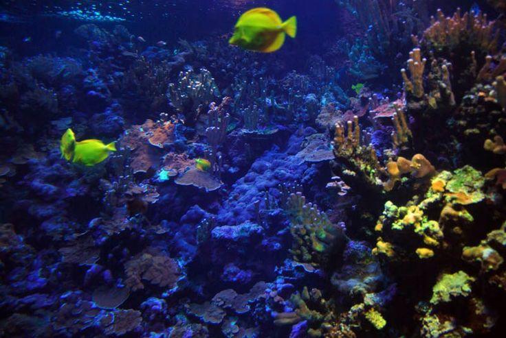 Hawaii's Aquariums: Maui and Waikiki