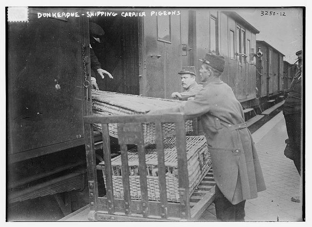 Donkerque [i.e., Dunkerque] -- shipping carrier pigeons (LOC) | Flickr - Photo Sharing!