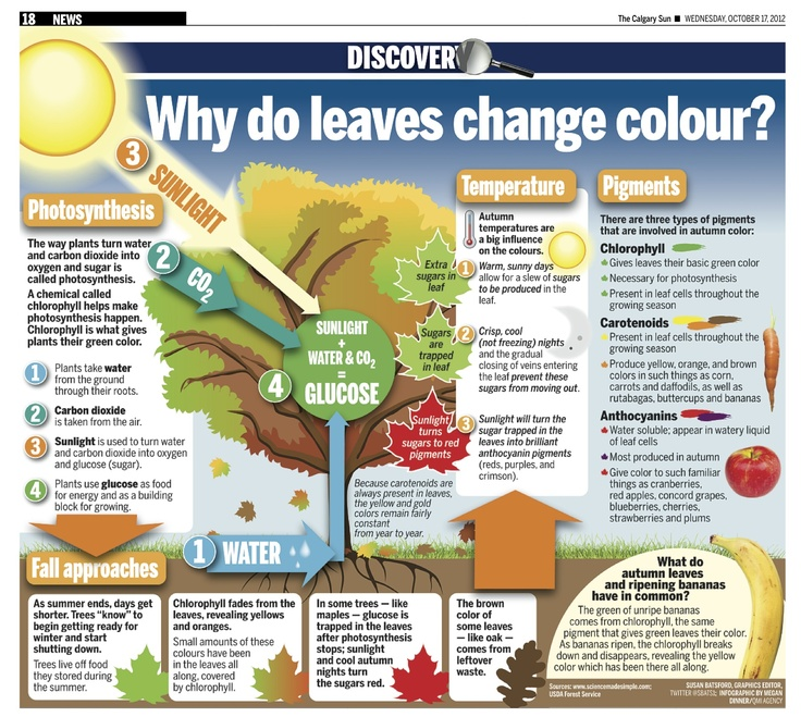 The scientific reason for leaves changing