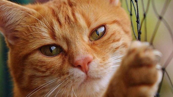 Kucing Lucu Dan Imut Mengeong Efek Suara Templat Mp3 Unduhan Gratis Pikbest Kucing Kucing Lucu Anak Kucing