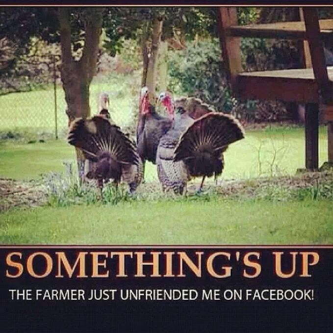 Funny Thanksgiving Quotes For Facebook: 69 Best Images About Seasonal Ideas: Fall/Halloween On