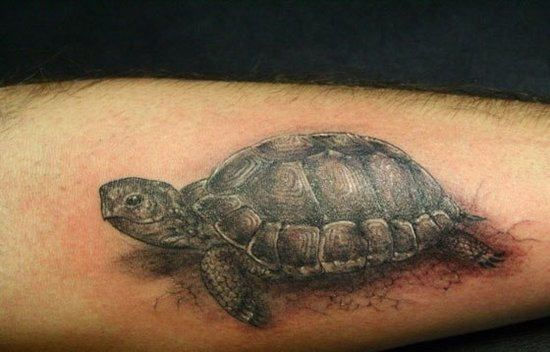 tortoise drawing for pinterest - photo #43