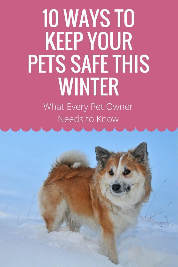10 Winter Safety Tips For Animals Dog Care Elderly Dog Care