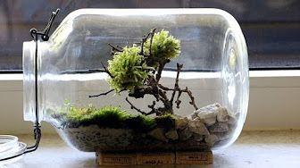 Comment faire un grand terrarium éternel! - YouTube