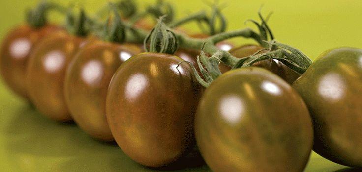 Realmente, no necesitan presentación. Y es que poco tiempo, los tomates kumato se ha convertido en los tomates de moda porque aunque…