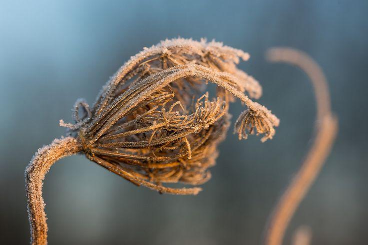 Just cold   by Gilbert de Bruijn