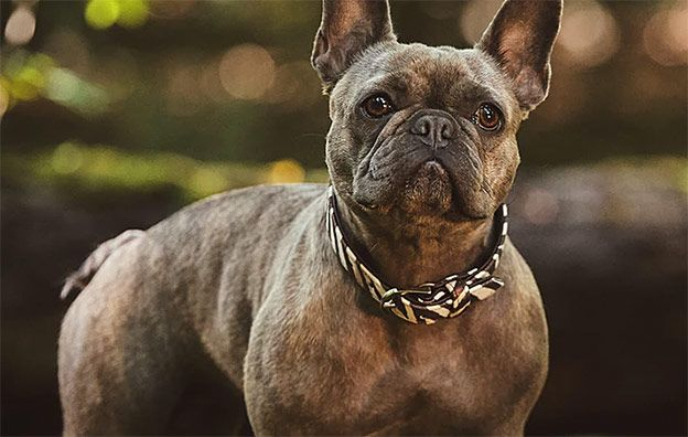 How To Choose A Dog Collar Your Pup Will Actually Love Celebrity Dog Pets Puppy Dogwalker Dogwalking Groomer Choosing A Dog Dogs Dog Walking